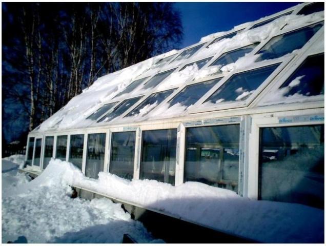 вирощування огірків в теплиці взимку