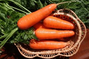 Вирощування моркви: технологія, агротехніка, умови