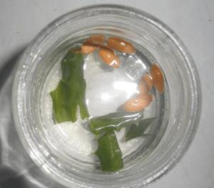 Підготовка насіння розсади перцю