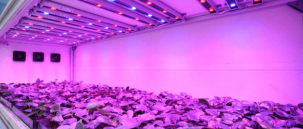 Освітлення в теплицях: світлодіодні лампи