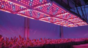 Переваги освітлення світлодіодними лампами: 1. економічний спосіб подачі світла; 2. спектр світлового потоку замінює сонячне світло; 3. тривалість використання світлодіодів сягає 50 000 годин; 4. не нагріваються і не обпалюють листочки рослин; 5. загоряються моментально після підключення; 6. потрібна невелика напруга 7. струшування або вібрація не здатні вивести з ладу такі лампи.