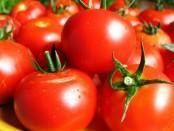 Технологія вирощування помідорів