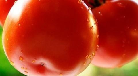 Як поливати помідори. Поливаємо помідори правильно!