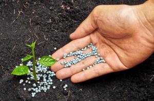 Мікродобрива для позакореневого підживлення рослин