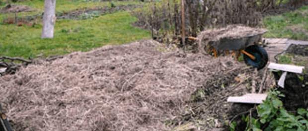 Натуральні добрива для саду та городу своїми руками в домашніх умовах