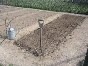 Готуємо ґрунт для вирощування кормового буряку