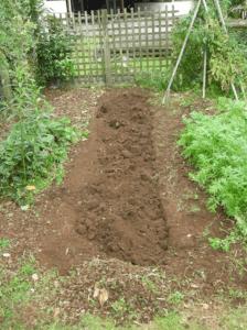 Готуємо ґрунт кормового буряку