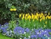 Як зробити красивий квітник на дачу: поради та ідеї (фото)