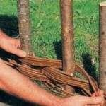 Плетений паркан