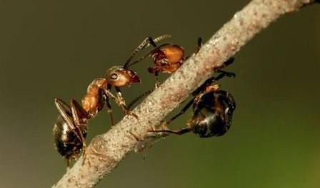 Як позбутися мурах