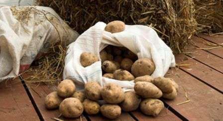 Зберігання картоплі в погребі,подвалі,ящику,ямі на городі