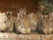 Кролівництво для початківців