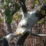 Захист дерев, взимку і навесні