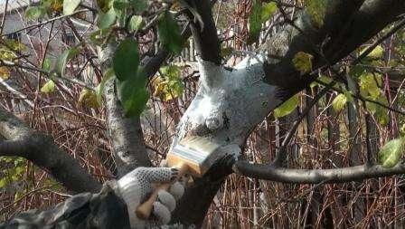 Захист дерев, взимку і навесні від зайців, гризунів...