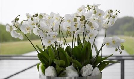 Догляд за орхідеями в домашніх умовах відео та фото