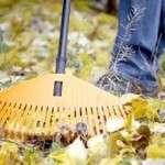 Підготовка саду до зими: обрізка і вкриття рослин