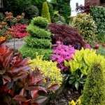 Декоративні багаторічні дерева для саду. Фото з назвами
