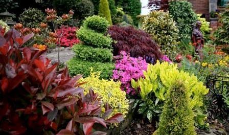 Декоративні дерева для саду. Фото з назвами