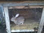 Клітки для кролів своїми руками: розміри і креслення
