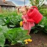 Вирощування розсади капусти: як виростити розсаду капусти самостійно