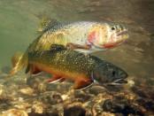 Календар кльову риби для України на 2018 рік