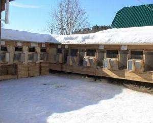 Зимове утримання кролів в домашніх умовах відео