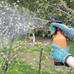 Бордоська суміш застосування в саду для обприскування дерев