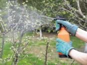 Відео: Бордоська суміш застосування-коли обробляти дерева в саду