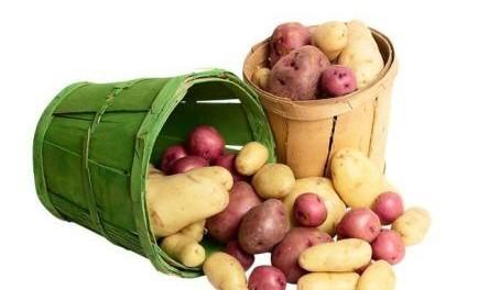 Як виростити ранню картоплю - вирощування ранньої картоплі