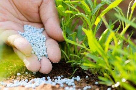Мінеральні добрива - наскільки ефективні хімічні препарати?
