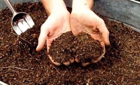 Органічні добрива - користь і шкода
