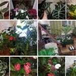 10 кращих добрив для кімнатних рослин
