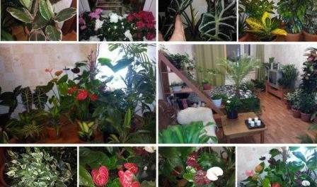 10 кращих добрив для кімнатних рослин - живлення кімнатних квітів