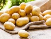 Хвороби картоплі (фото) опис та лікування