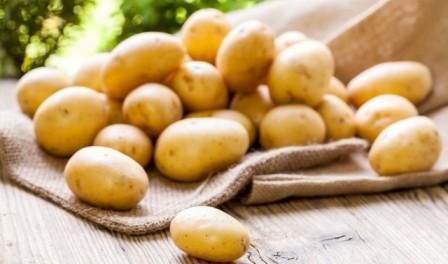 Хвороби картоплі (фото) опис і лікування парші, фітофторозу, раку