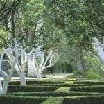Побілка дерев навесні: чим білити дерева весною