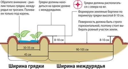 metod-vyroshhyvannya-ovochiv-po-mitlajderu-2