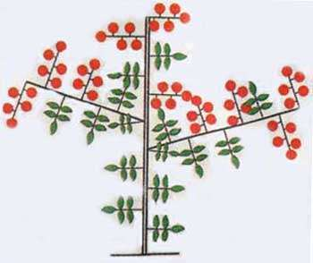 pasunkyvannya-pomidor-y-vidkrutomy-grynti-video-5