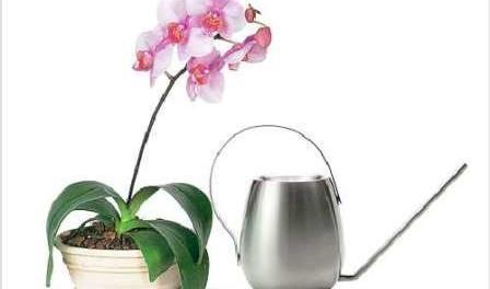 Відео: Як поливати орхідеї в домашніх умовах - правильний полив