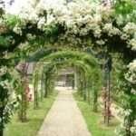 Багаторічні квіти для саду. Фото і назва
