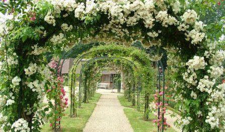 Багаторічні квіти для саду.Фото і назва весняних квітів для клумб