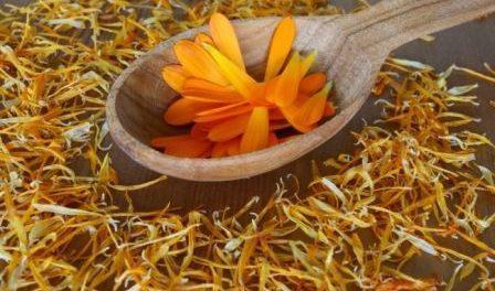 Календула лікувальні властивості для здоров'я і краси: Фото масла
