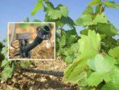 Крапельний, надземний і підземний полив винограду