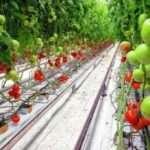 Гідропоніка своїми руками для огірків і томатів