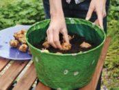 Коли посадити гладіолуси восени в ґрунт? Рекомендації по догляду