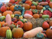 Урожай гарбуза: як його зберігати на зиму