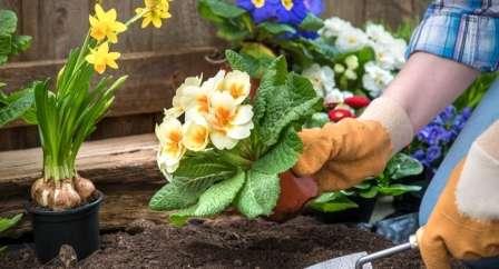 Каталог багаторічних квітів для дачі: фото з назвами і описом