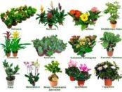 Каталог кімнатних рослин з фотографіями і назвами