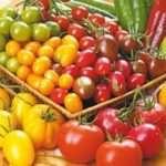 Безрозсадний спосіб вирощування помідорів