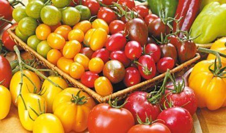 Безрозсадний спосіб вирощування помідорів у відкритому грунті - як вирощувати томати безрозсадним способом